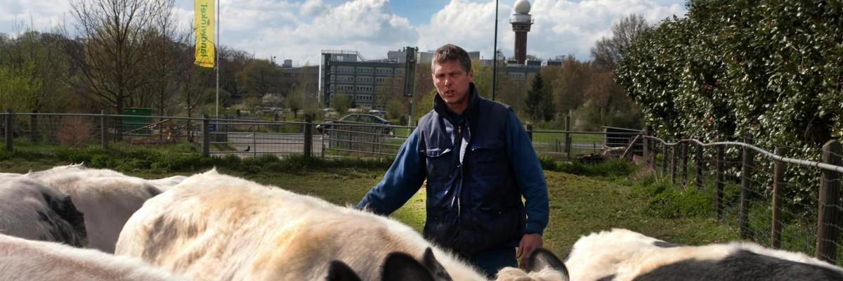 Dirk-Jan Stelling